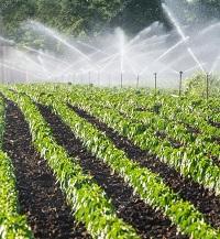 Sprinkling Irrigation-of-vegetables